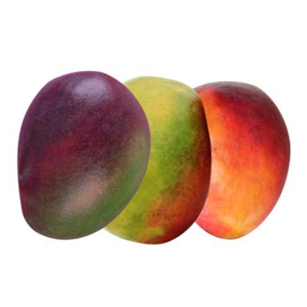 GPL - We are Mango Ripeners