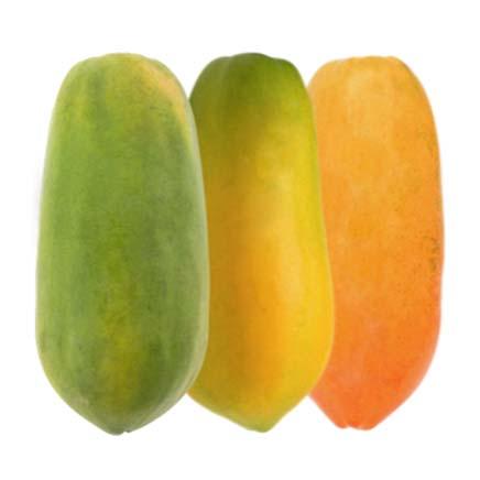 GPL - We are Papaya ripeners